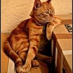 catthinking